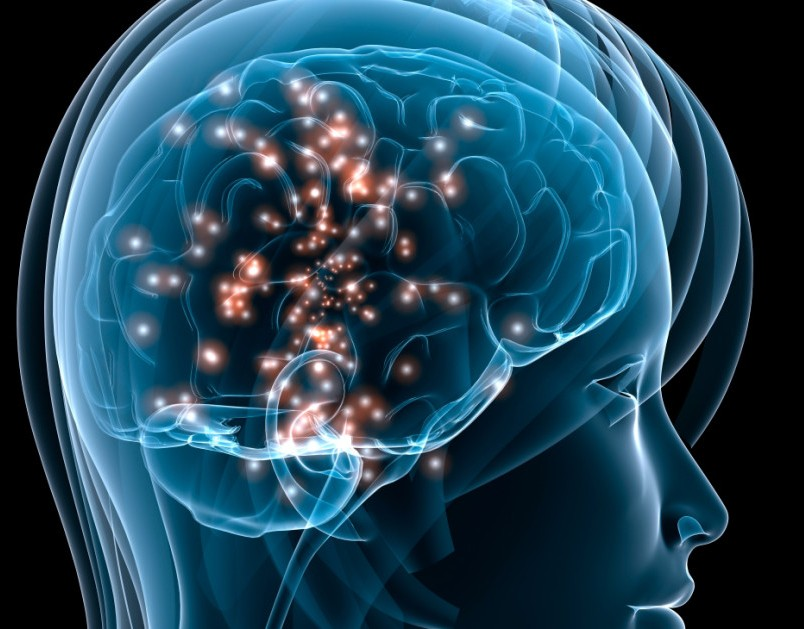 how stress affects human behavior Brain basics provides information on how the brain works the changing brain—effects of genes and the environment or stress these factors may.